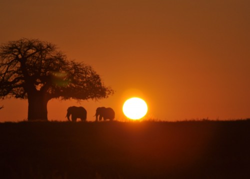 Sunrise Ruaha National Park